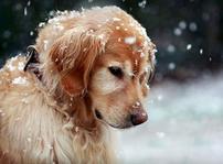 爱与狗的世界
