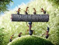 蚂蚁盈微盘现货指导