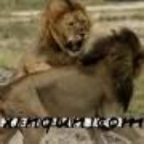 动物世界之大型掠食