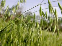 内蒙古健禾绿色农产品